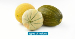 5 Types of Melons you can find at the Grocery Store