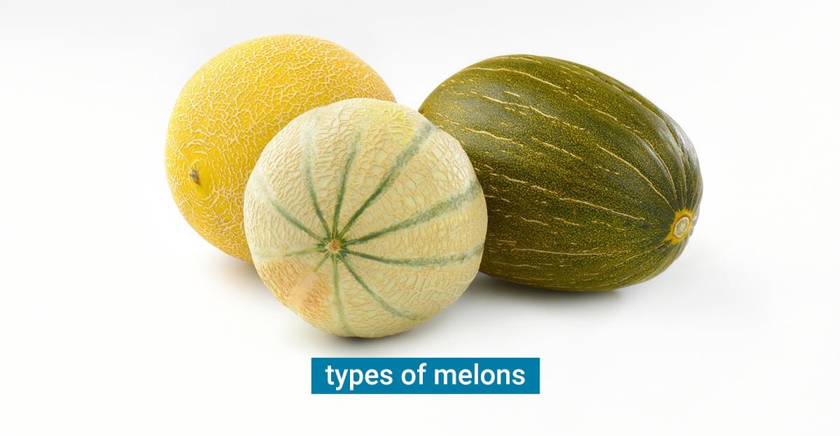 Types of melons at the grocery store