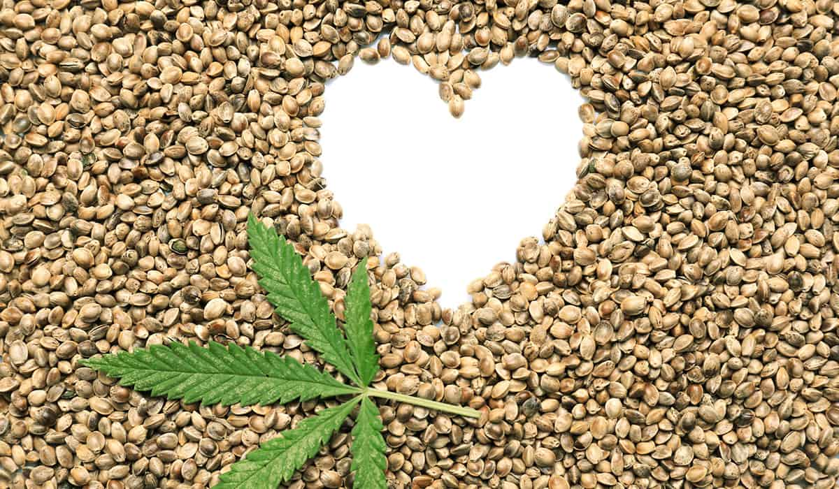 What you need to know abount eating and buying hemp seeds