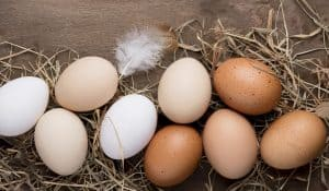 How to Choose Humanely Raised Eggs