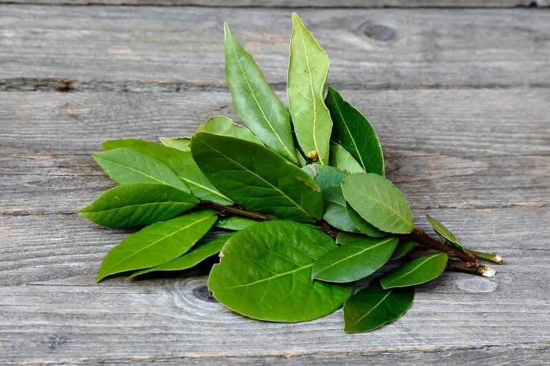 Buying bay leaves - fresh or dried