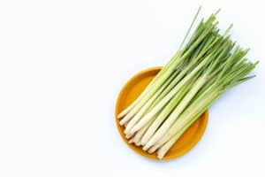 Buying Lemongrass Just Got Easier – Your Grocery Guide